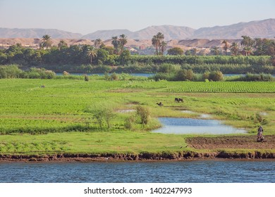 Editorial: ARMANT, EGYPT, October 12, 2018 - Farmers working on Armant Island south of Luxor