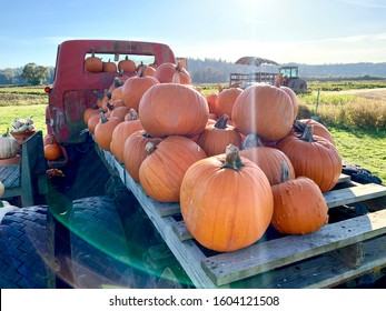 Editorial: Bailey Farm, Snohomish, Washington, United States. Old flatbed truck loaded with the season's harvest of orange pumpkins. October, 2019