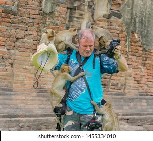 Editorial use only; cheeky inquisitive monkeys climb up on a photographer, taken at Lopburi, Thailand, in July 2019.