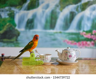 Editorial use only; a cute parrot having a cup of tea, taken at Pathumthani, Thailand, in October, 2019.