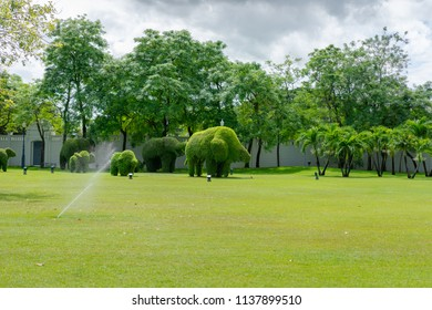 Editorial use only; manicured garden and shrubs, taken at a park outside Bangkok, Thailand, in July 2018.