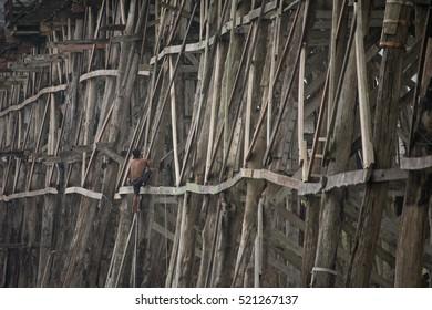 "Editorial use only: NOV 19,2016 : A man climbing the wooden bridge ""Morn Bridge"" longest wooden bridge in Thailand, Sangkhla Buri District, Kanchanaburi. (wooden background)"