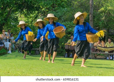 Editorial use only; pretty Thai lady demonstrates how rice is harvested at The Rose Garden, Bangkok, Thailand, taken on January 27th, 2017.
