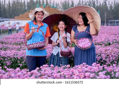 Editorial use only; Thai ladies posing in a filed of blooming flowers, taken at Pathumthani, Thailand, in January 2020.