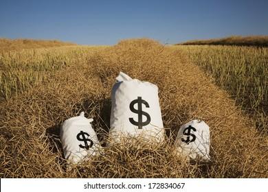 Edmonton, Alberta, Canada; Bags Of Money On A Farm Field