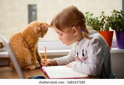 Lerne zu Hause. Kindermädchen machen Hausaufgaben mit Hauskatze. Hübsches Ingwer-Kätzchen, das auf dem Tisch sitzt, wo das Kind schreibt.Zurück zur Schule.