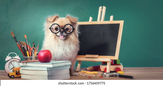 Education, Back to School concept with Cute puppies Pomeranian Mixed breed Pekingese dog. - Shutterstock ID 1756459775