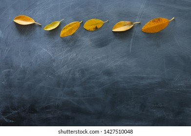 education concept. Empty blackboard background with autumn leaves. top view
