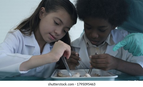 Education concept. Young students are experimenting with frog dissection in a laboratory.