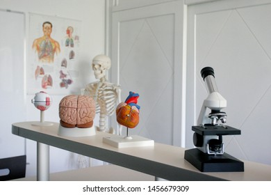 Educational microscope and human organs in biology classroom