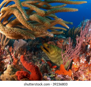 eel hiding in the reef