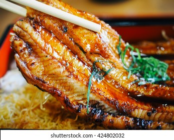 Eel or Unagi Fish, with Rice. Delicious Famous Japanese Seafood Menu, Close up, Selective Focus.