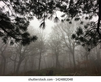 Eerie, creepy, spooky foggy misty british Forest