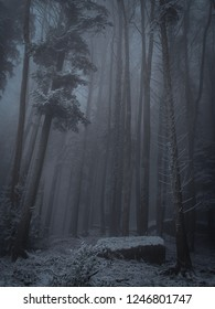 eerie forest in winter time (Switzerland)