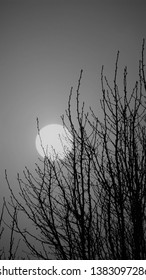 An eerie full moon at the close of winter in northern Illinois.