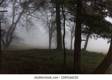 The eerie hill in the forest is in the fog