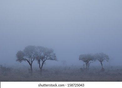 An eerie mist settling over the African Bushveld in the early hours of the morning