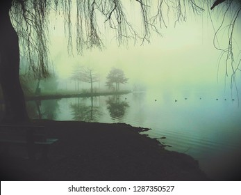 Eerie morning at the Pond