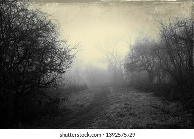 An eerie path on a foggy winters day, surrounded by trees. With a dark, spooky blurred abstract, grunge effect edit.
