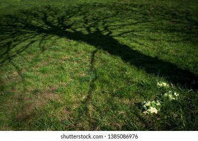 Eerie shadow of tree on meadow