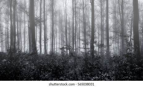 Eerie spooky forest