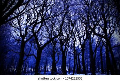 eerie winter trees
