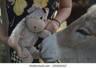 Eeyore meets his family. Stuffed toy patting a donkey.