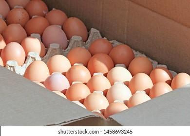 Inside Egg Images, Stock Photos & Vectors | Shutterstock