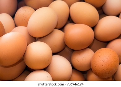 Egg, Eggs, Roster eggs, Chicken eggs Va.