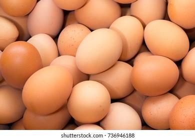 Egg, Eggs, Roster eggs, Chicken eggs Vb.