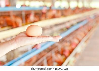 egg on hand