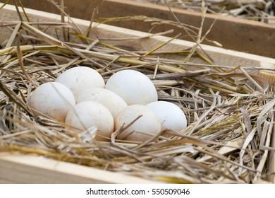 Egg on straw.