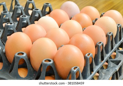 egg in the panel