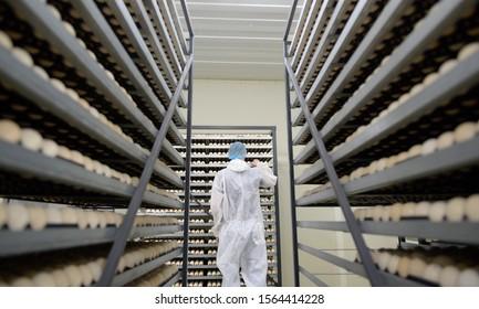 egg plant factory poultry farm stack hatchery