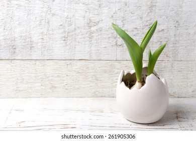 Egg with plant inside on wooden background