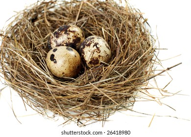 egg in a real nest