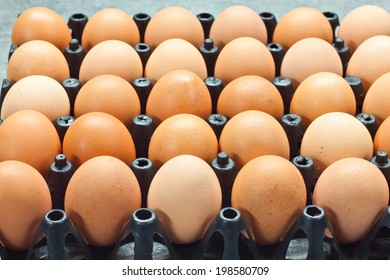 egg in tray