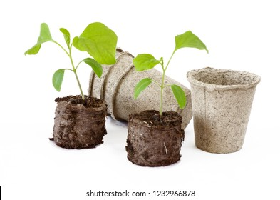 Eggplant seedlings in peat tablets and peat pots on white background