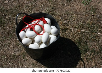 eggs in the basket on the yard