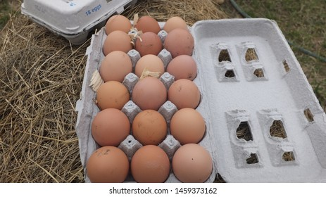 Eggs from chickens on a farm.