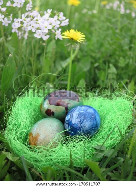 Eggs in a green grass