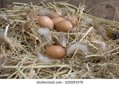 Eggs hen on straw nest which has chicken feather in the old barn of farmhouse and old wooden wall / Still Life image and dim light