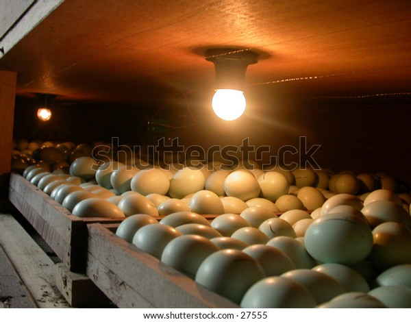 Eggs and a lamp, this is a traditional machine to hatching/incubating  the duck's or chicken's eggs