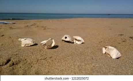 Eggs of Loggerhead turtle on the beach on Cyprus