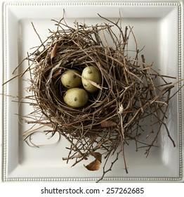 Eggs in nest on white plate