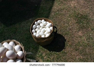 Eggs on the basket