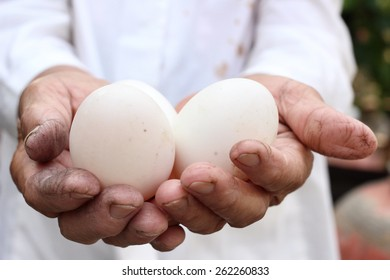 Eggs on the hands