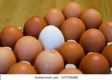 Eggs on a wooden table. One egg is different. It is white and the others are brown.