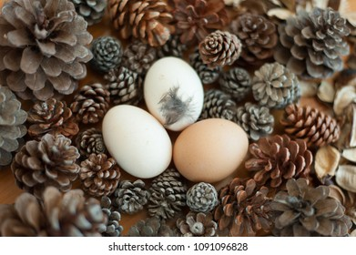 Eggs and pine cones