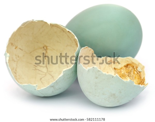 Eggs of pond heron over white background